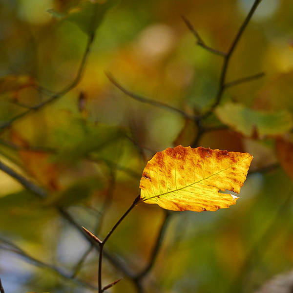 Photograph - Fall - Backlit by Richard Reeve