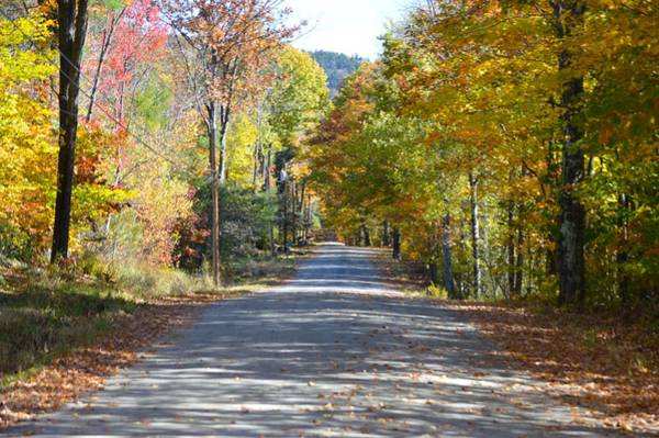 Photograph - Fall Backroad by Chris Alberding