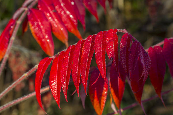Photograph - Fall Beauty by Nick Mares