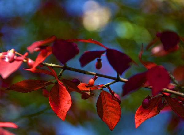 Wall Art - Photograph - Fall Bokeh by Kathi Isserman