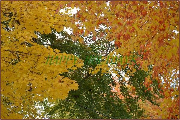 Greetingcards Photograph - Fall Canopy by Sonali Gangane