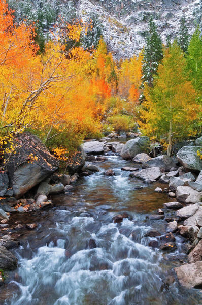 Bishop Photograph - Fall Color Along Bishop Creek, Inyo by Russ Bishop