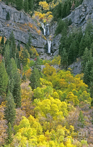 Photograph - Fall Color And Waterfalls In Provo Canyon Utah by Dave Welling