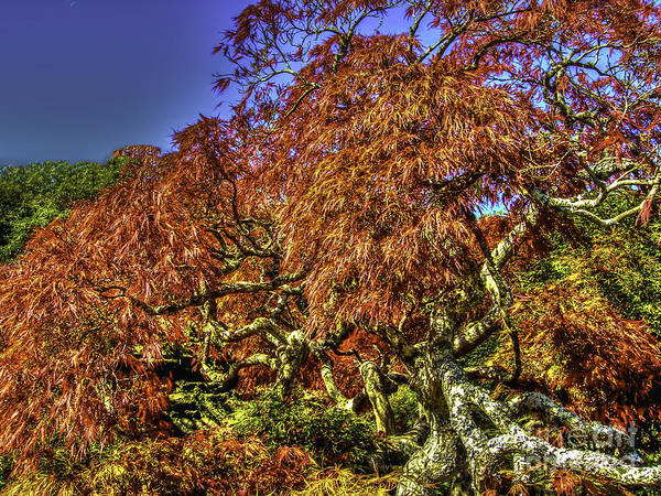 Photograph - Fall Color At Biltmore by Dale Powell
