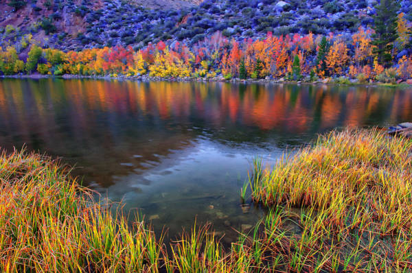 Bishop Photograph - Fall Color At Dusk Along North Lake by Scott McGuire