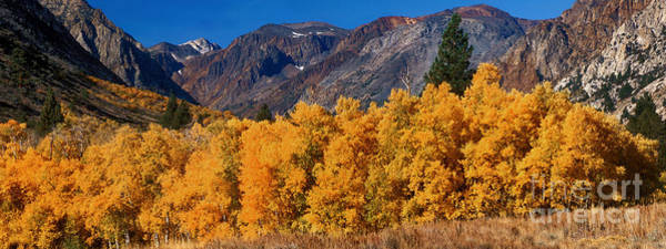 Photograph - Fall Color Eastern Sierras California by Dave Welling