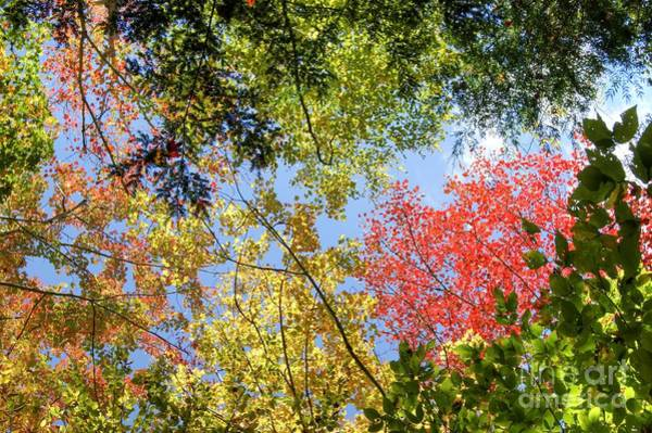 Photograph - Fall Color In New England by David Birchall