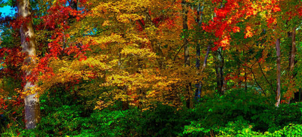Photograph - Fall Color Orton Effect by Rick Mosher