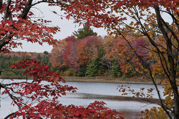 Photograph - Fall Color by Russell Todd