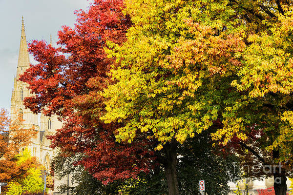 Photograph - Fall Color St Paul Cathedral by Thomas R Fletcher