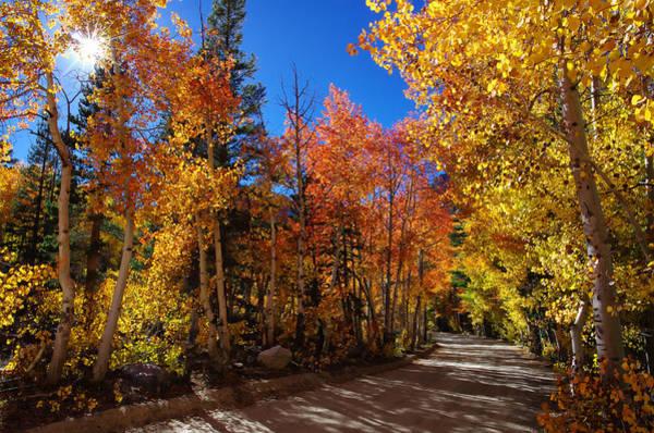 Bishop Photograph - Fall Color Sunburst by Scott McGuire