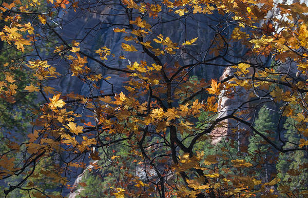 Photograph - West Fork Tapestry by Tam Ryan