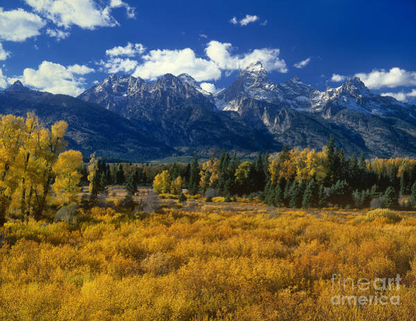 Photograph - Fall Color Tetons Blacktail Ponds Grand Tetons Nationa by Dave Welling