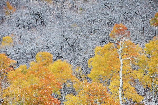 Steamboat Springs Photograph - Fall Colored Aspen Trees And Bare Trees by Karen Desjardin