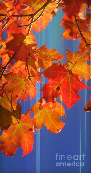 Photograph - Fall Colors 2 by Rima Biswas