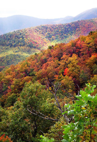 Photograph - Fall Colors Along The Blueridge by Duane McCullough