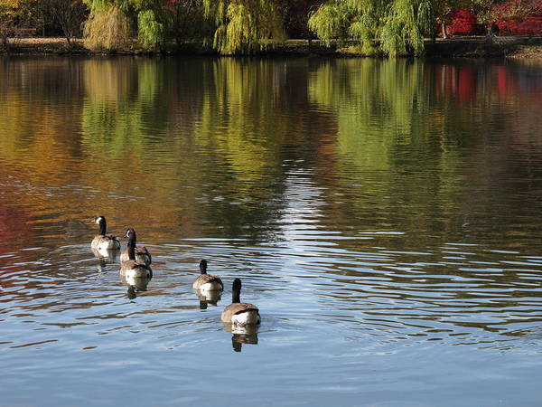 Photograph - Fall Colors And Pond by Frank Romeo