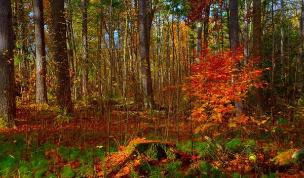 Photograph - Fall Colors by Craig Incardone
