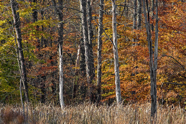 Photograph - Fall Colors by Dale Kincaid