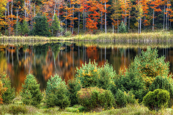 Sullivan County Photograph - Fall Colors by David Simons