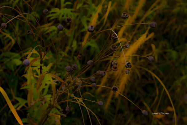 Photograph - Fall Colors Haze by Edward Peterson
