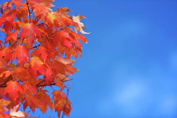 New Leaf Photograph - Fall Colors In Bloom by Robert D. Barnes
