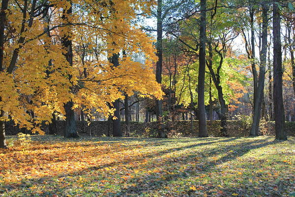 Sestroretsk Photograph - Fall Colors In St. Petersburg Russia by Christine Rivers