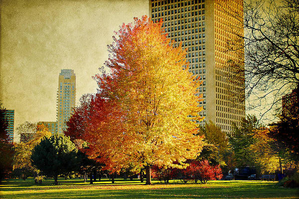 Photograph - Fall Colors In The City by Milena Ilieva