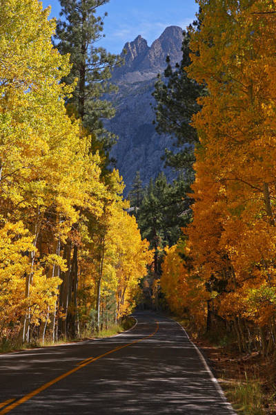 Photograph - Fall Colors In The Eastern Sierra Nevada by Steve Wolfe