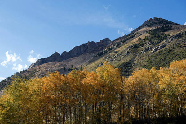 Aspen Photograph - Fall Colors In The Sierra Nevada by Kevinjeon00