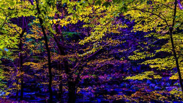 Photograph - Fall Colors by Louis Dallara