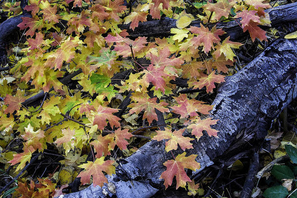 Photograph - Fall Colors by Michael Ash