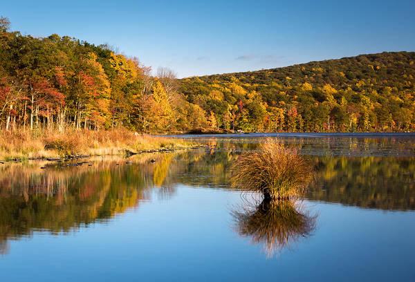 Photograph - Fall Colors by Mihai Andritoiu