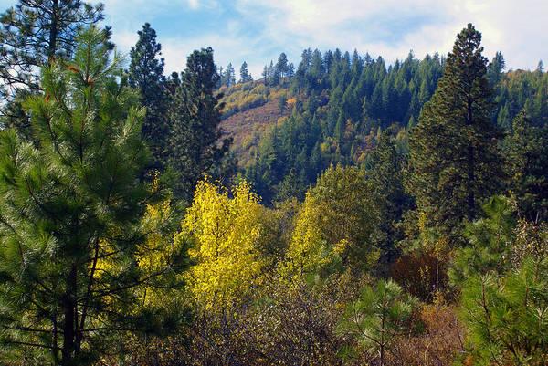 Photograph - Fall Colors Near Spokane by Ben Upham III
