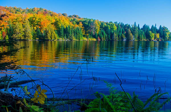 Photograph - Fall Colors On Grand Sable Lake by Gary McCormick