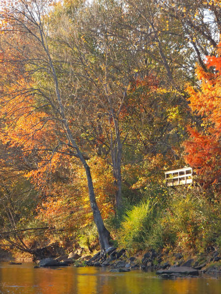 Photograph - Fall Colors On The Little Red by Philip Rispin