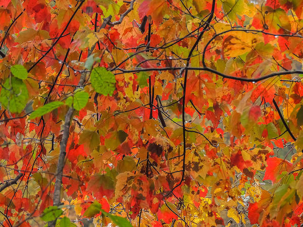 Photograph - Fall Colors by Robert Mitchell