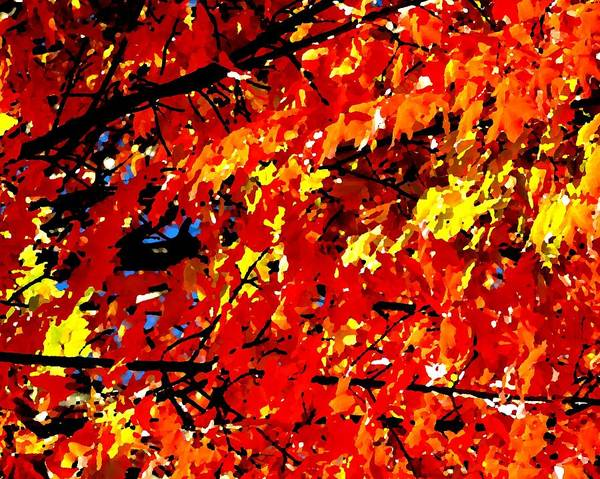 Photograph - Fall Colors by Toby McGuire