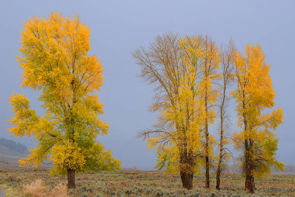 Photograph - Fall Comes To The Lamar Valley by Craig Ratcliffe