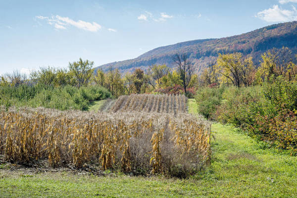 Voorheesville Photograph - Fall Cornfield Near Helderbergs by Ray Summers Photography
