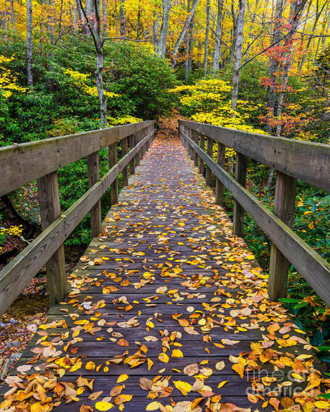 Wall Art - Photograph - Fall Crossing by Anthony Heflin