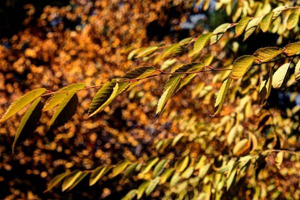 Photograph - Fall by David Matthews