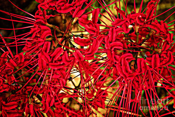 Photograph - Fall Explosion by Kim Henderson
