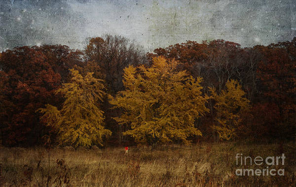 Photograph - Fall Fields by Terry Rowe