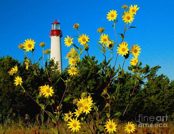Photograph - Fall Flowers At The Light by Nick Zelinsky