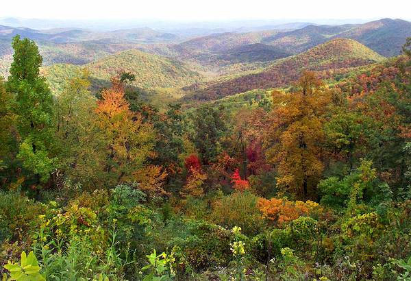 Photograph - Fall Folage 3 Along The Blueridge by Duane McCullough