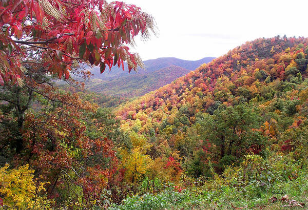 Photograph - Fall Folage Along The Blueridge by Duane McCullough