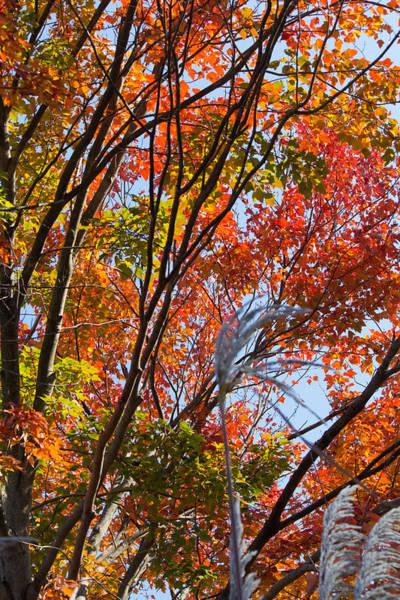 Photograph - Fall Foliage At Heckscher Park Huntington Ny by Susan Jensen