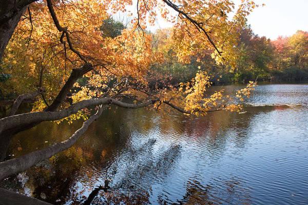 Photograph - Fall Foliage At Twin Ponds  by Susan Jensen