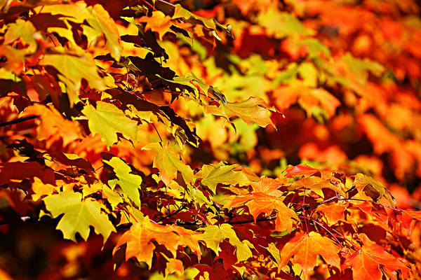 Fall Foliage Colors 13 Art Print